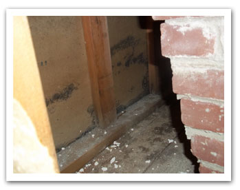 Mold Can Be Found And Will Grow Where Moisture Resides